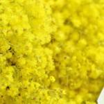 dan-mimoza-poziv-na-prevenciju-raka-vrata-maternice-op